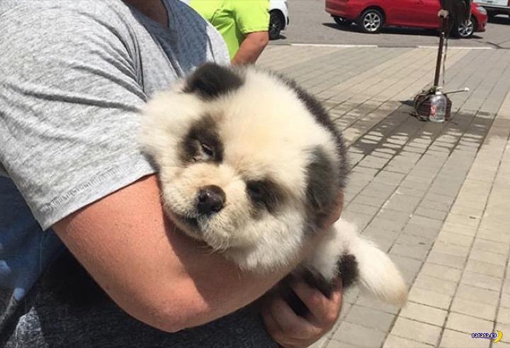 В Сочи туристам предлагают сфотографироваться с пандой