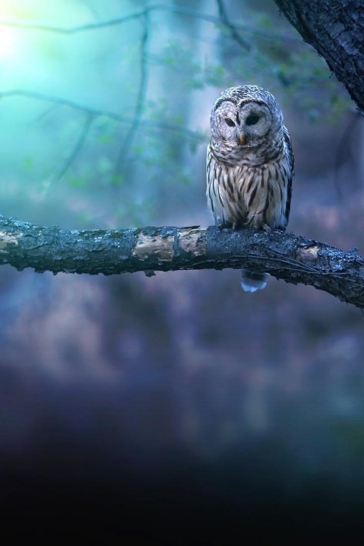Россыпь красивых фотографий - 184