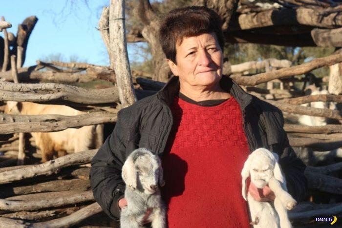 Неприятный козлёнок родился в Аргентине