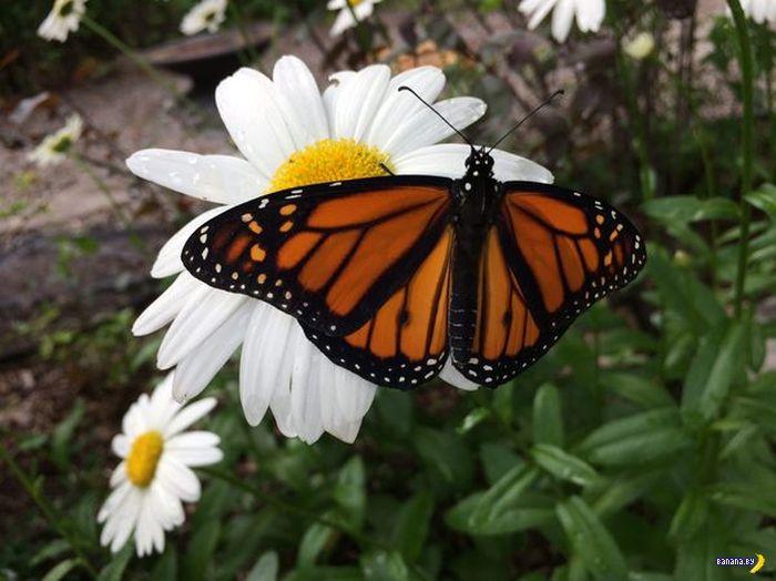 От яйца до бабочки
