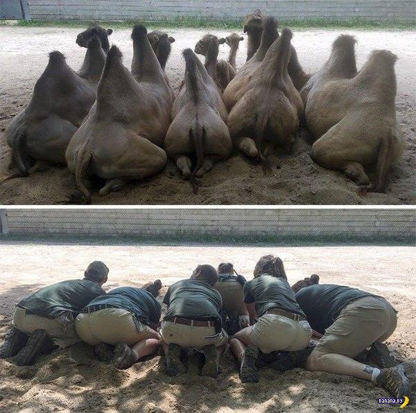 Развлечение служителей зоопарка