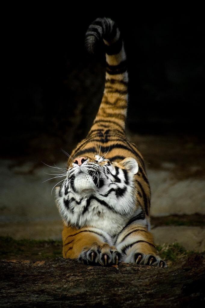 Россыпь красивых фотографий - 188