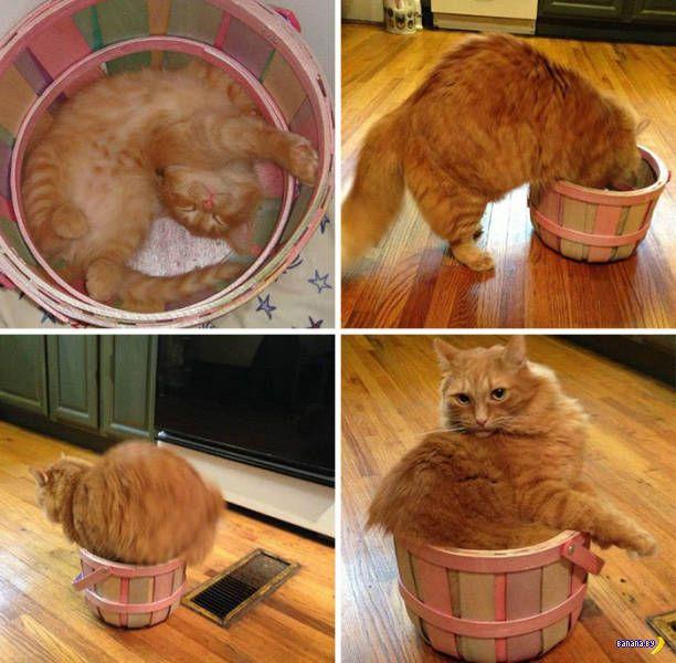 Я –кот, я сижу, где хочу!