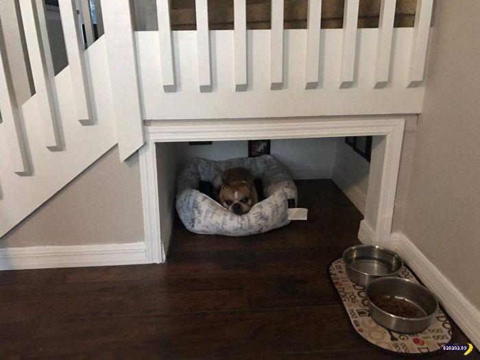 Комната для собаки