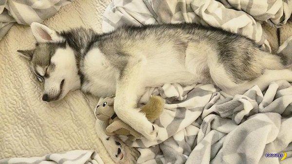 Спящие собаки и комфорт