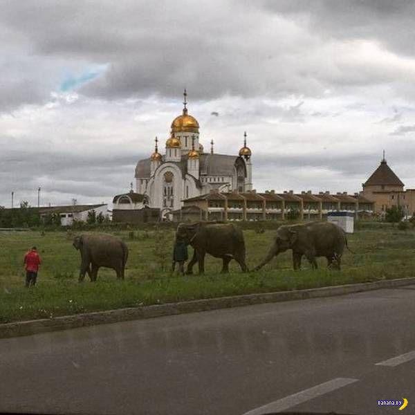 А тем временем в России - 116