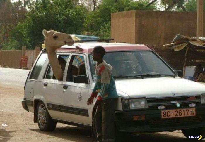 А тем временем в Африке - 5