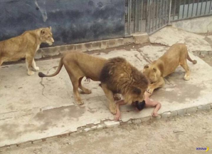 Очень жалко львов