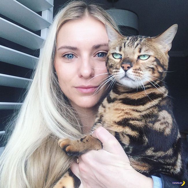 Коты не любят селфи!