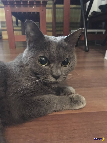 Самый злой кот в мире!