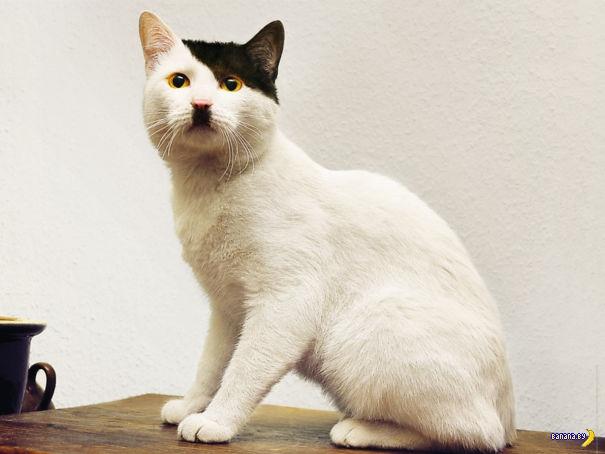 Коты с занимательным окрасом