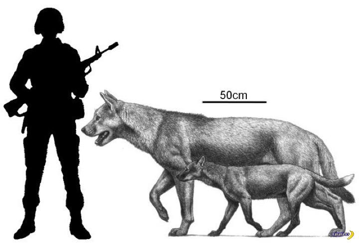 Интересные факты о биологии - 1