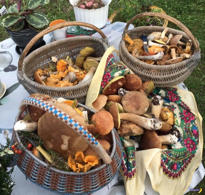В Беларуси нашествие грибов!
