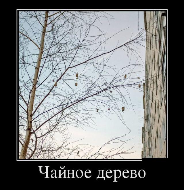 Демотиваторы - 979