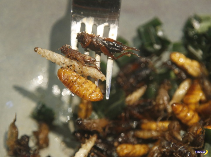 Жучки, кузнечики, личинки