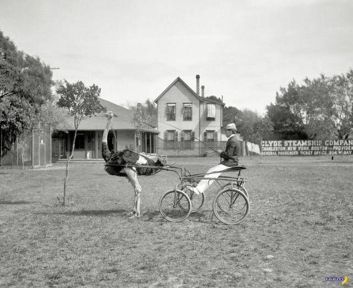 Прикольные картинки - 1928