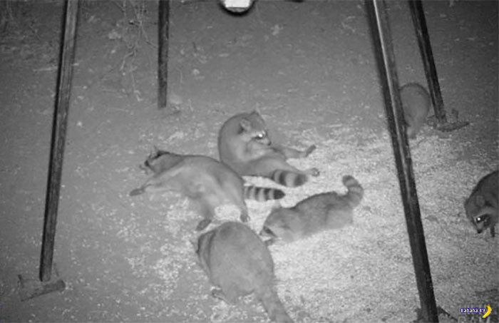 Фотоловушки и чудесные фотки животных