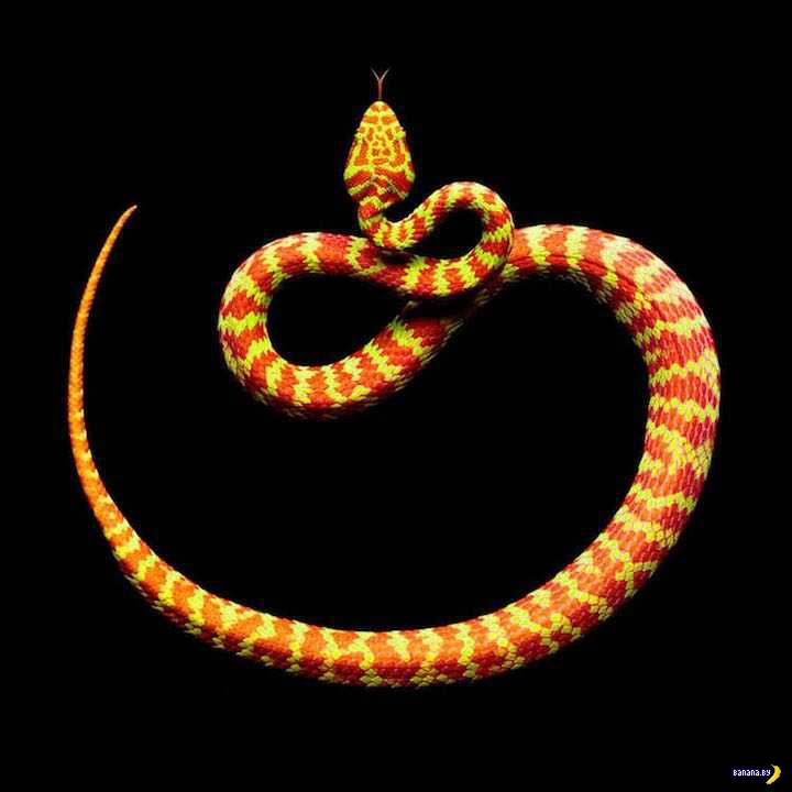 Фотограф, что снимает змей