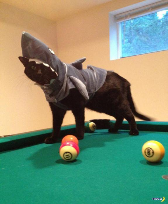 Переодевание котов и собак