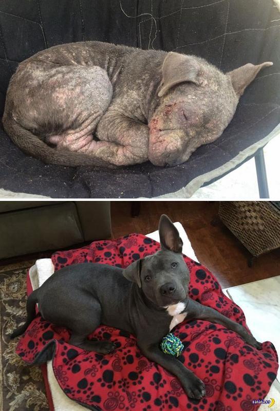 Спасённые собаки