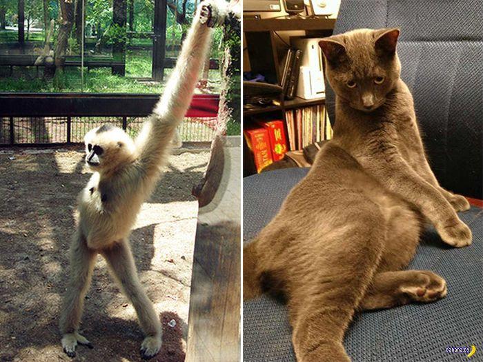Животные позируют на фото