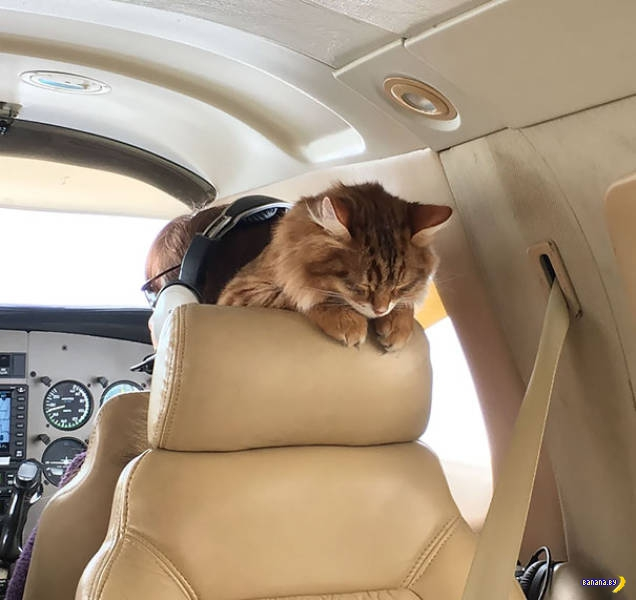 Зверьё в самолётах