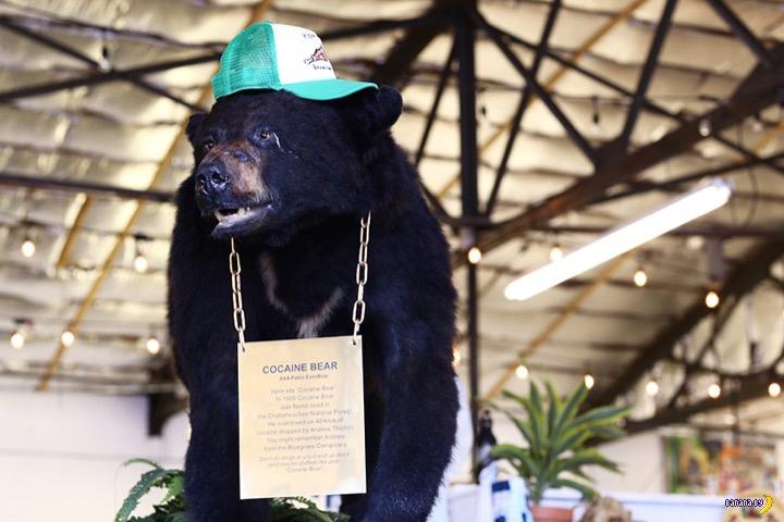 Медведь-кокаинщик