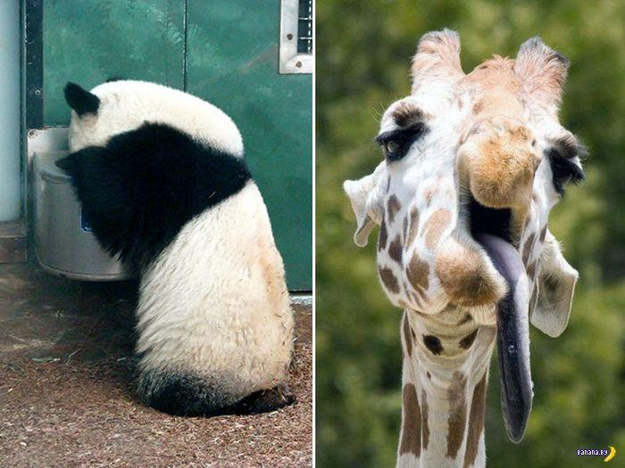 Как выглядело бы похмелье у животных