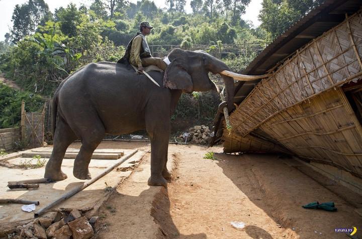 Полицейские слоны в Индии