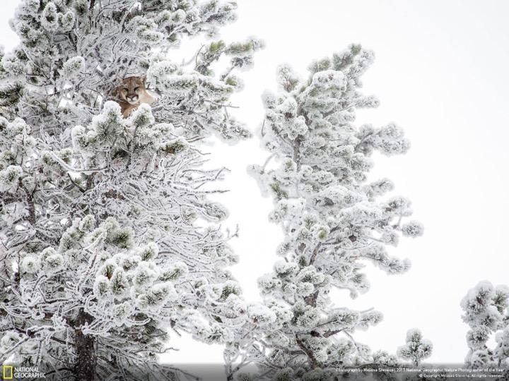 Лучшие фото с конкурса National Geographic 2017
