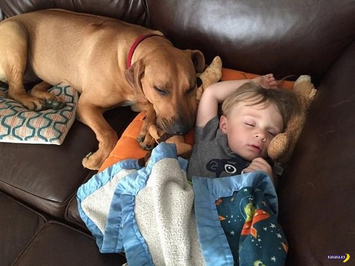 Дети и собаки!