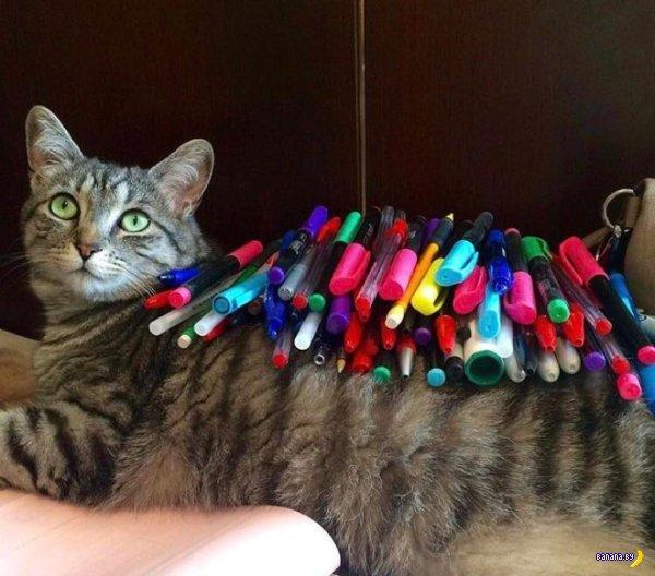 Что можно положить на кота?