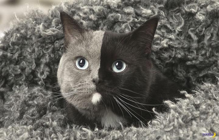 Двуликий кот