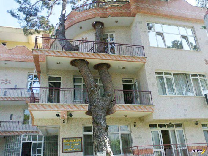 Спасти рядового дерево!