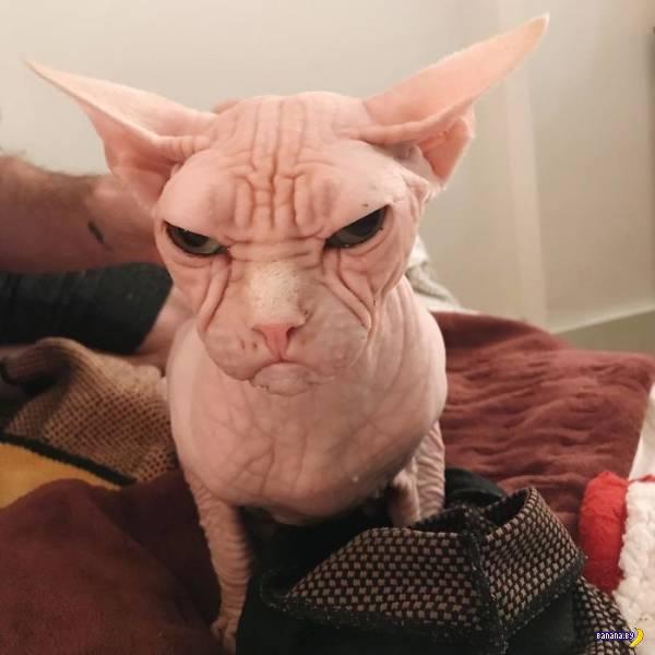 Это Локи, он всегда недоволен