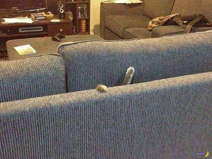 Коты попали в  беду!