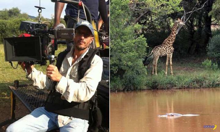 Нелепая смерть: жираф убил оператора