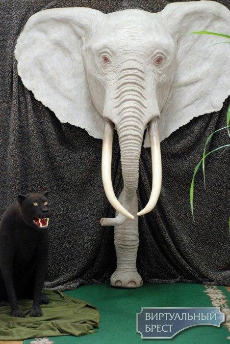 Выставка «В мире животных» в Бресте