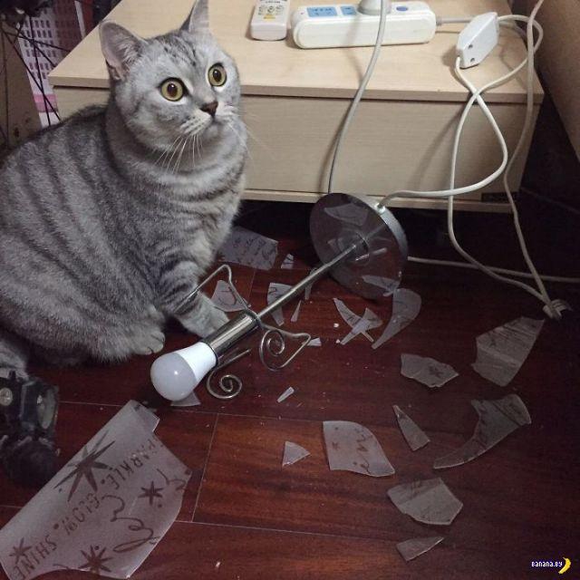 Коты застигнуты на месте преступления