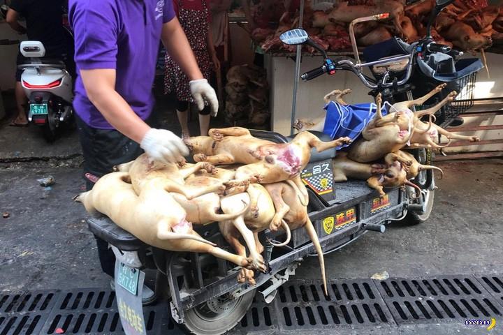 И снова в Китае фестиваль собачьего мяса