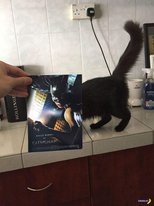 Коты и постеры известных фильмов