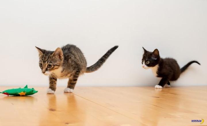 Фрог и Ньют –четыре лапы на двух котят