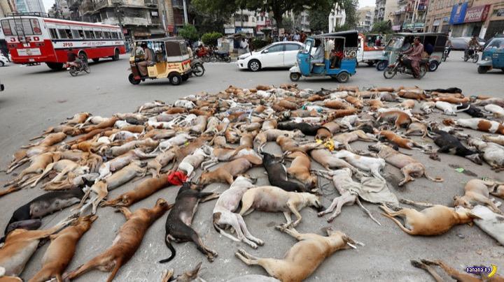 Фейковые новости на примере собачек