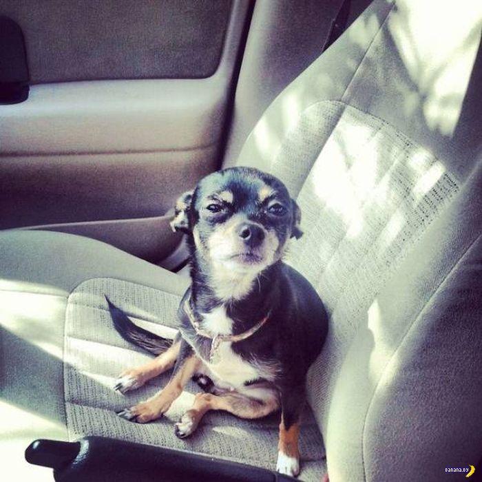 Коты и собаки панически боятся ездить к ветеринару