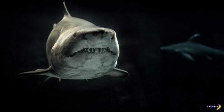 Акула убила туриста из Чехии в Египте