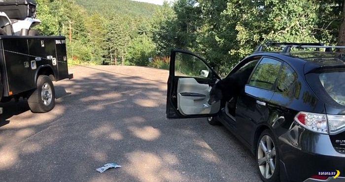 В машину забрался медведь