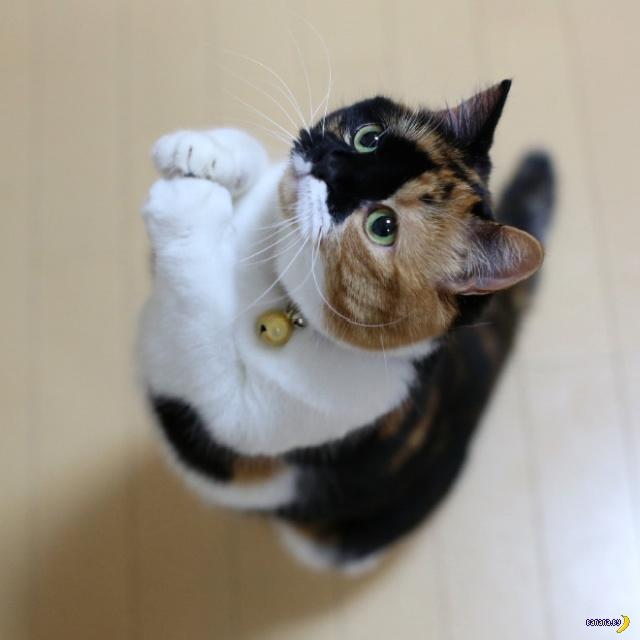 Молящиеся коты