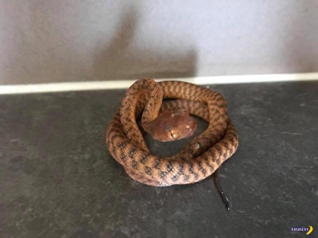 Найди змею?