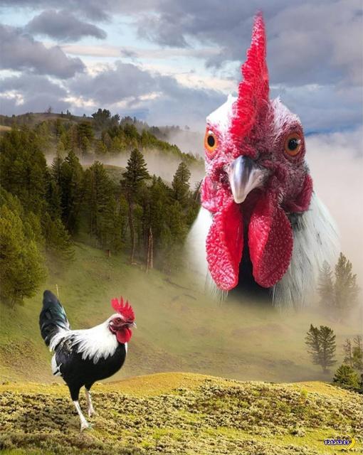 Мастерство не пропьешь: художественные портреты животных