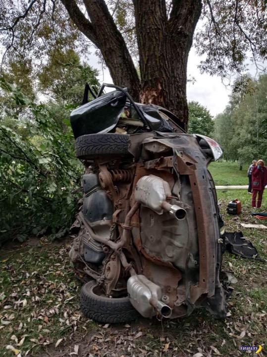 Дерево оказалось крепче машины